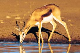 Description: Rolfontein Nature Reserve
